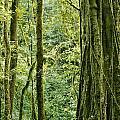 View Within A Rain Forest by Mattias Klum