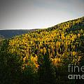 Vignette Of Autumn Gold  by Jeff Swan