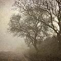Vigilants Trees In The Misty Road by Guido Montanes Castillo