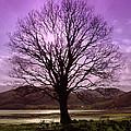 Village Green Tree by Lynn Bolt