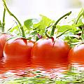 Vine Tomatoes And Salad With Water by Simon Bratt Photography LRPS