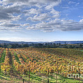 Vines In Fields by Diego Re