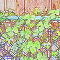 Vines On A Fence by Debbie Portwood