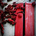 Vines On Red Shutters by Lainie Wrightson