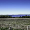 Vineyard Of Leelanau Michigan by LeeAnn McLaneGoetz McLaneGoetzStudioLLCcom