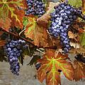 Vineyard Splendor by Sharon Foster