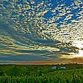 Vineyard Sunset I by William Fields