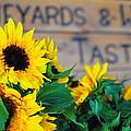 Vineyards And Winery Tastings by Brian Mollenkopf