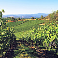 Vineyards In The Yarra Valley, Victoria, Australia by Peter Walton Photography