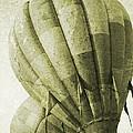 Vintage Ballooning II by Betsy Knapp