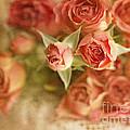 Vintage Peaches N Creme Spray Roses by Susan Gary