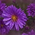 Vintage Purple  by Richard Cummings