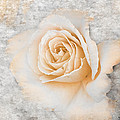 Vintage Rose II by Jai Johnson