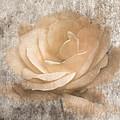 Vintage Rose IIi by Jai Johnson