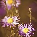 Vintage Violet  by Saija  Lehtonen