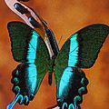 Violin With Green Black Butterfly by Garry Gay