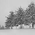 Virginia Snow by Todd Hostetter
