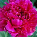 Virginia Tech Peace Garden 3 by Roseanne Lafferty