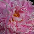 Virginia Tech Peace Garden 4 by Roseanne Lafferty