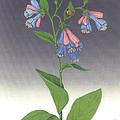 Viriginia Bluebells by Ken Bloomhorst