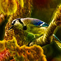 Visions Of A Blue Jay by Bill Tiepelman