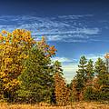 Visions Of Fall  by Saija  Lehtonen