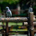 Visitor by Zoran Buletic