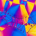 Vitamin B6 Crystal by Michael W Davidson