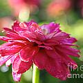 Vivid Floral by Susan Herber