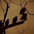 Vulture Island by Kim Henderson