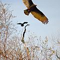 Vulture by Karen  W Meyer
