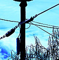 Vulture On Phone Pole by Garry Gay