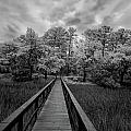Wadmalaw In Ir by Calvin Smith