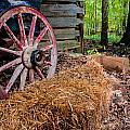 Wagon Daze by Gene Hilton