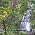 Wahkeena Falls by Charles Robinson