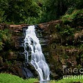 Waimea Valley Falls by Tommy Anderson