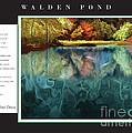 Walden Pond by David Glotfelty