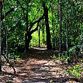 Walk In The Woods by Kari Tedrick