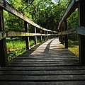 Walk This Way To Nature by Anthony Walker Sr