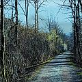 Walking In The Shadows by Heinz G Mielke