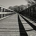 Walking The Lines by Rachel Cohen