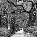 Walking Through The Park In Black And White by Suzanne Gaff