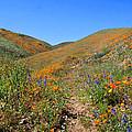 Walking Thru The Wildflowers by Lynn Bauer