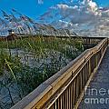 Walkway To The Beach by Scott Moore