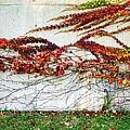 Wall Of Fall by Todd Sherlock