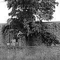 Wall Tree by Rob Hans