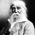 Walt Whitman, American Poet by Sylvia Beach Collection, Princeton