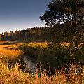 Warm Morning Sun. The Trossachs National Park. Scotland by Jenny Rainbow