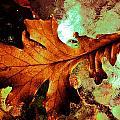 Warm Oak by Beth Akerman