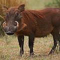 Warthog by Bruce J Robinson